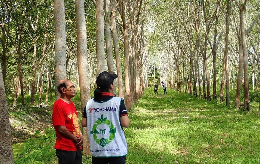 タイ・スラタニ地区での農園調査